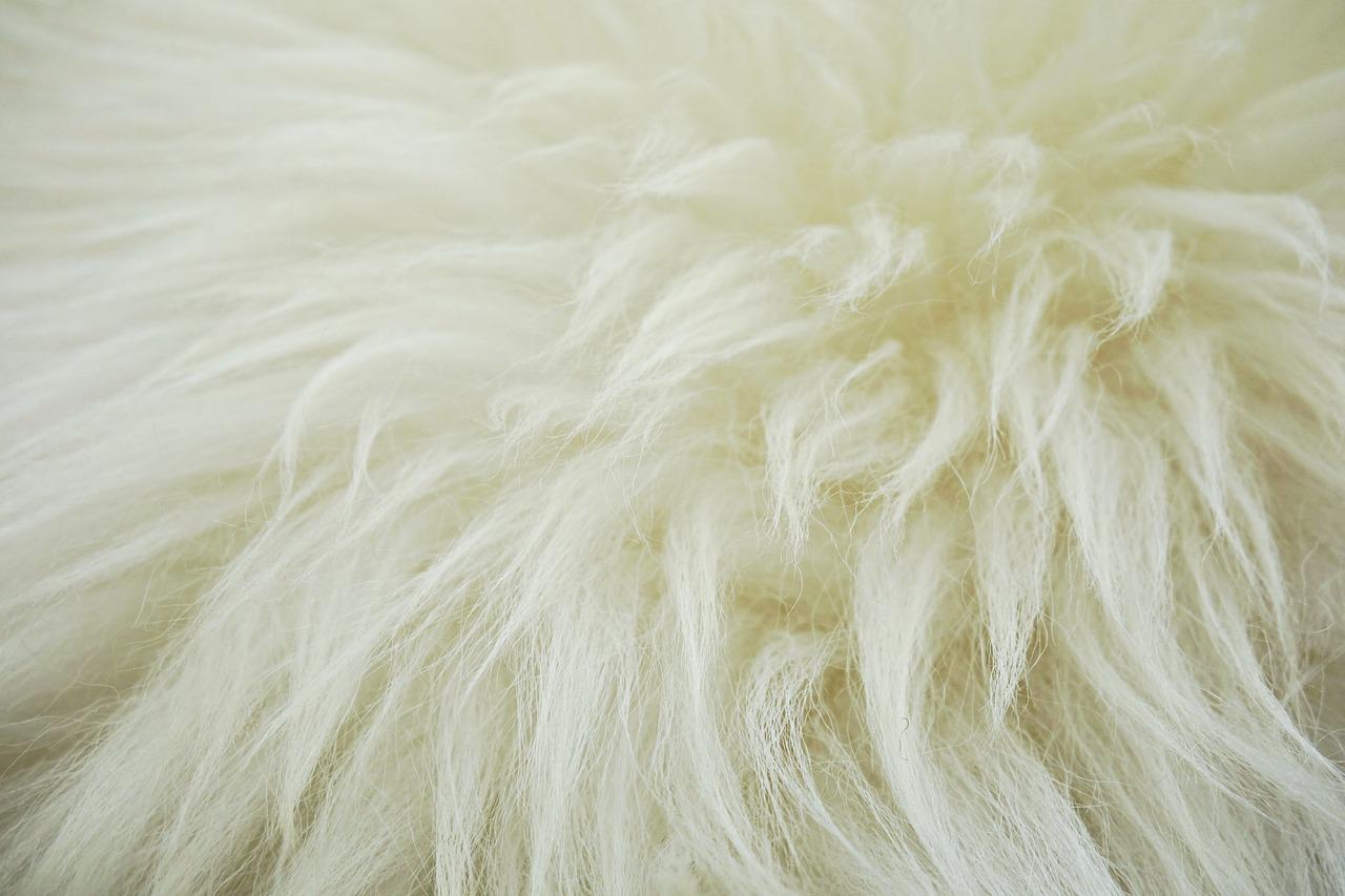 羊毛画像 奈良市カイロプラクティック
