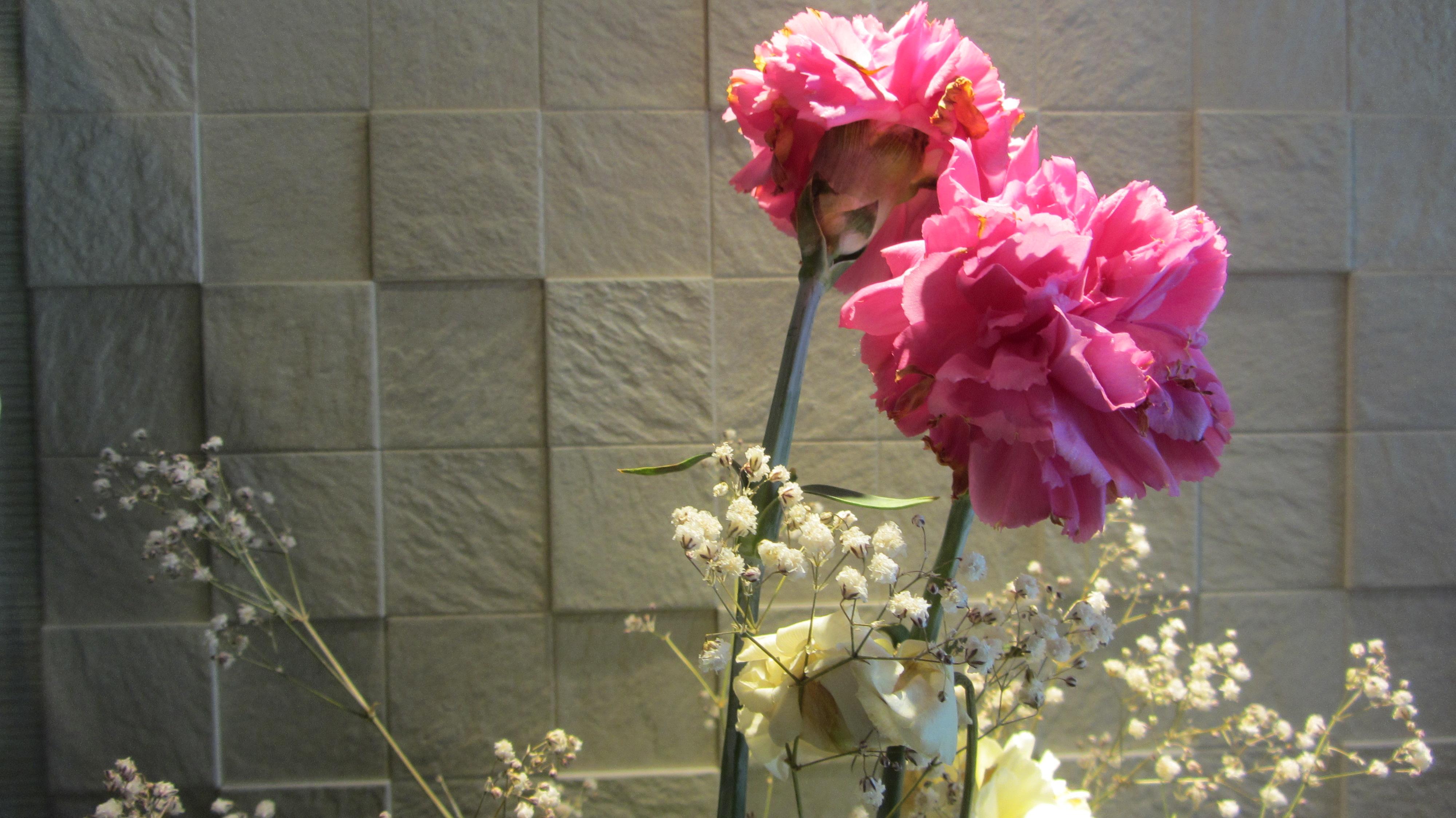 奈良整体カイロプラクティック 西大寺整体カイロプラクティックの花