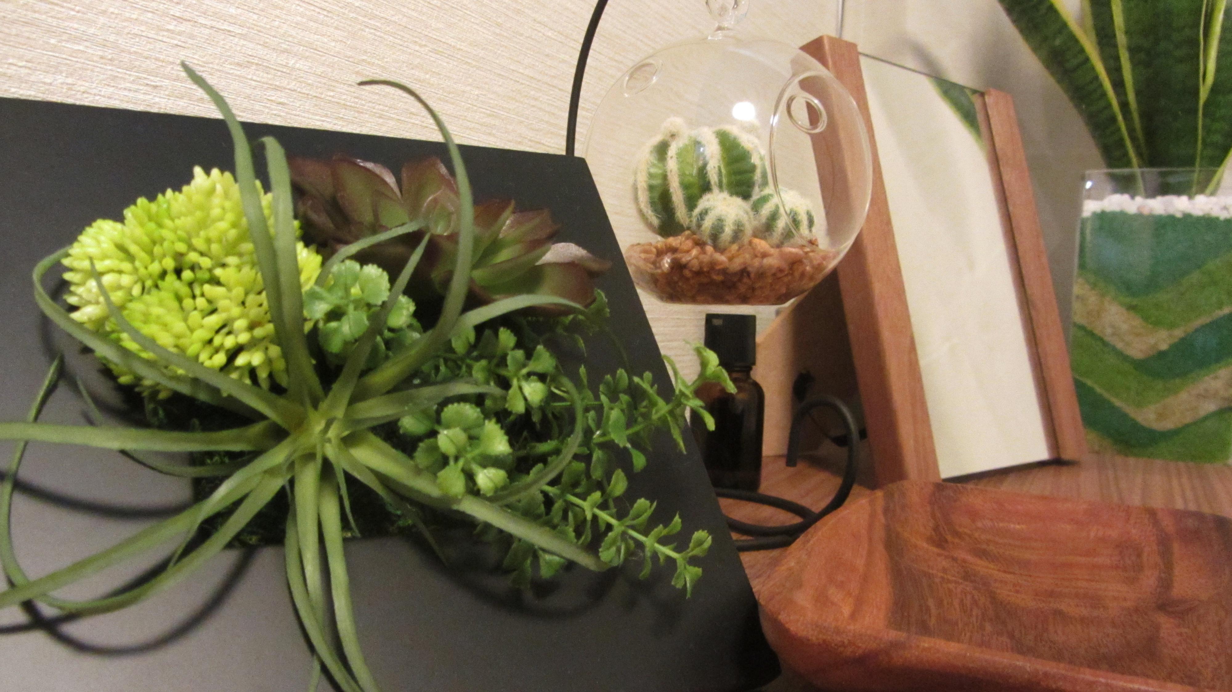 整体奈良 大和西大寺カイロ整体Somaの観葉植物