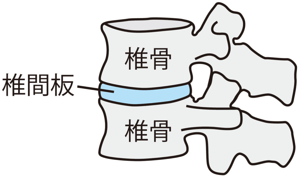 椎間関節の構造イラスト 大和西大寺カイロプラクティック