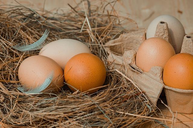 鳥の巣の中の卵 奈良市整体カイロ